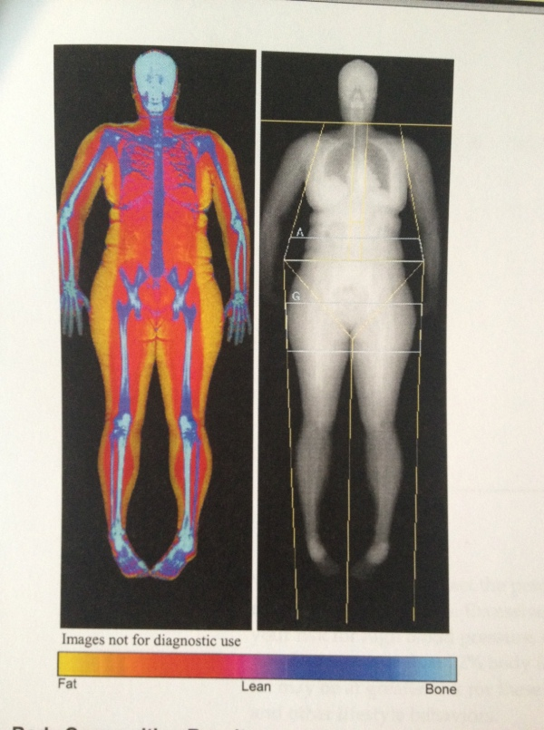 fat vs muscle vs bone.. BODY COMP SCAN